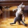 KittenpasteCo